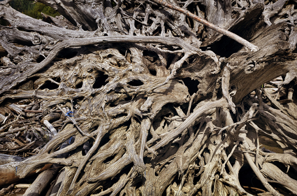 Lilloet lake, roots of a tree, The Ucwalmicw reserve, British Columbia, Canada